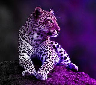Обои на телефон тени, леопард, фиолетовые