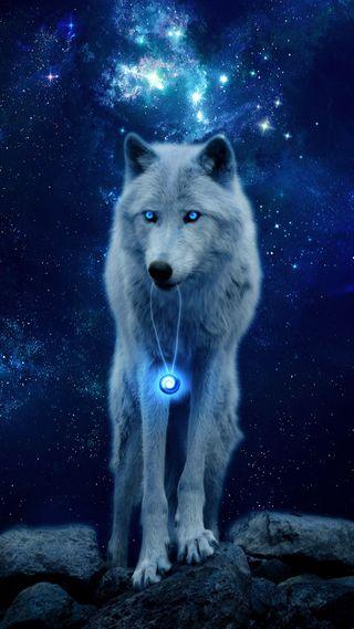 Обои на телефон фантазия, синие, ночь, звезды, животные, галактика, волк, белые, neckless, galaxy