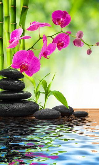 Обои на телефон спа, конепт, релакс, орхидеи, камни, вода, spa concept, relax spa concept, orchids water stones