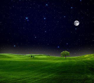 Обои на телефон hd, природа, новый, приятные, небо, ночь, звезды, луна, дерево, трава, поле