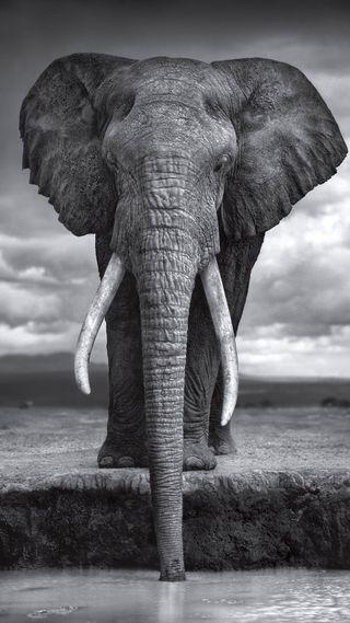 Обои на телефон слон, icio, elefante bw