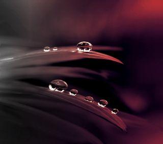Обои на телефон капли дождя, природа