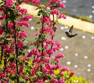 Обои на телефон маленький, цветы, розовые, little flowers