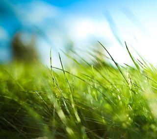 Обои на телефон трава, лето, зеленые, summerness