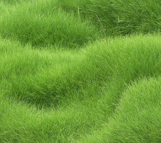 Обои на телефон свежие, фон, трава, текстуры, зеленые