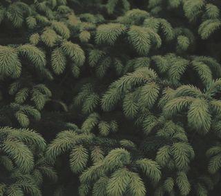 Обои на телефон спокойствие, фото, простые, природа, натуральные, лес, зеленые, дерево, ветви, the woods, spruce, hd