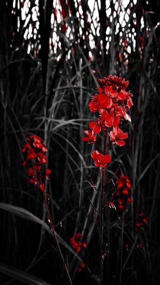 Обои на телефон весна, цветы, природа, поле, лаванда, красые, естественные, red flower, mustard