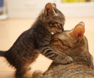 Обои на телефон поцелуй, милые