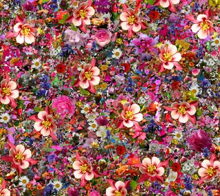 Обои на телефон лепестки, цветы, цветные, природа, коллаж