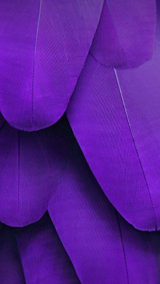 Обои на телефон перья, фиолетовые, стандартные, макс, красота, nubia z11 max