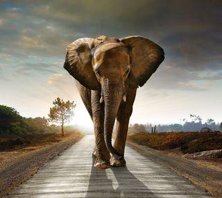 Обои на телефон природа, закат, дорога, слон