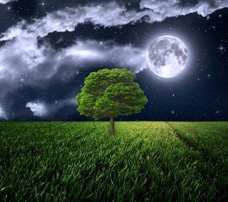 Обои на телефон трава, свет, поле, ночь, луна, дерево, full