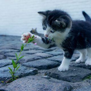 Обои на телефон кошки, котята, коты, tatli, sevimli, kedi