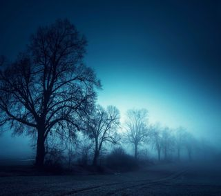 Обои на телефон восход, утро, туманные, туман, природа, деревья, foggy morning, countryside