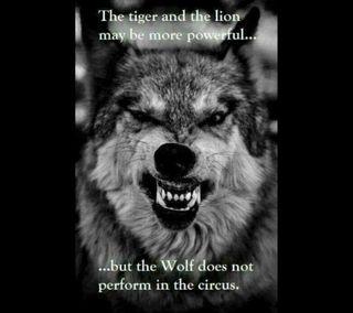 Обои на телефон будь, тигр, текст, мотивация, мотивационные, лев, лайк, высказывания, волк, circus, be like the wolf