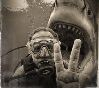Обои на телефон селфи, акула, океан, неправильный, вода, swim, selfie gone wrong, scuba diver, scuba, jaws, diver