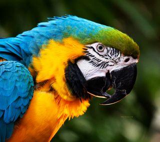 Обои на телефон попугай, красочные, животные, colorful parrot