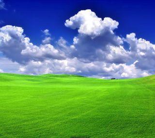 Обои на телефон трава, природа, поле, пейзаж, облака, небо