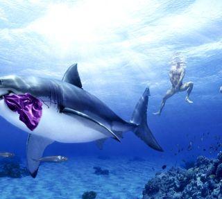 Обои на телефон акула, -------------