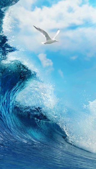 Обои на телефон против, природа, пейзаж, грани, волна, seagull vs wave qhd, seagull, s6, qhd, 1440x2560