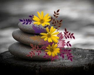 Обои на телефон камни, цветы, темные, природа, листья, желтые, leaves and flowers