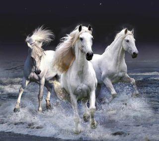 Обои на телефон три, лошади, пляж, океан, лошадь, вода, брызги, белые, trio horse splash, trio