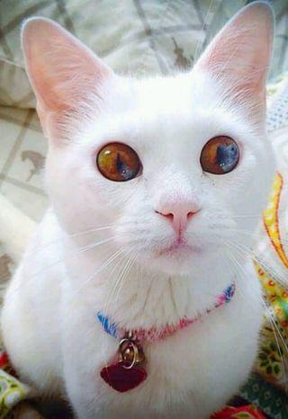 Обои на телефон коты, милые, кошки, белые