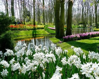 Обои на телефон сад, цветы, прекрасные, парк, весна, beautiful garden