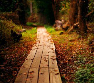 Обои на телефон спокойствие, путь, природа, осень, листья, лес