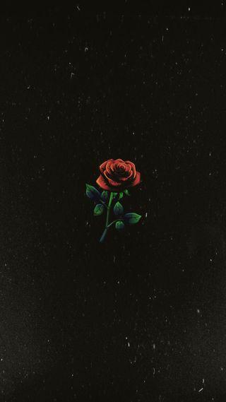 Обои на телефон розы, природа, красые, горячий, tumblr, 1994