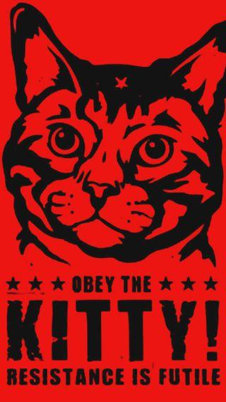Обои на телефон ярость, хаха, питомцы, мяу, милые, лол, кошки, котята, забавные, purr, obey the kitty, obey, lol