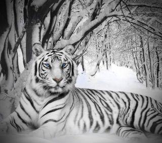 Обои на телефон хищник, тигр, снег, синие, прекрасные, кошки, зима, арт, bengal, art