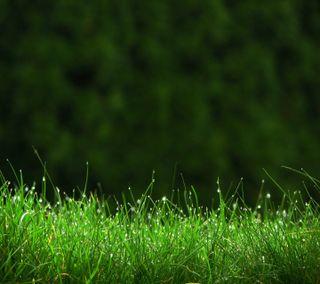 Обои на телефон трава, рокки, природа, прекрасные, милые, крутые, классные, капли, зеленые, green grass hd