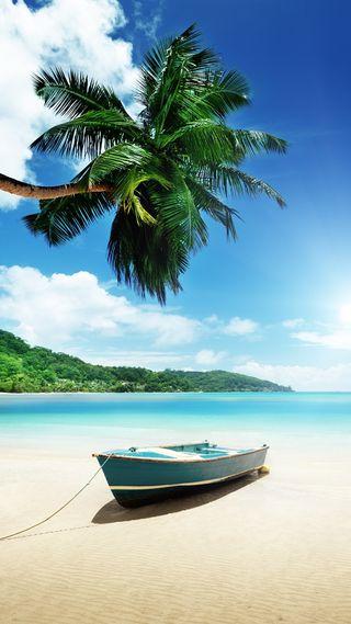 Обои на телефон цветы, тропические, пляж, пейзаж, море, vacations, palmera, hd, full