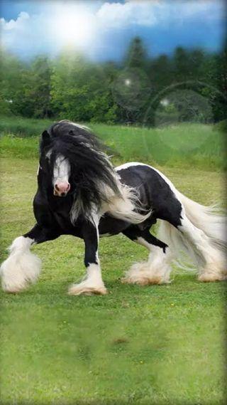Обои на телефон лошадь, черные, белые