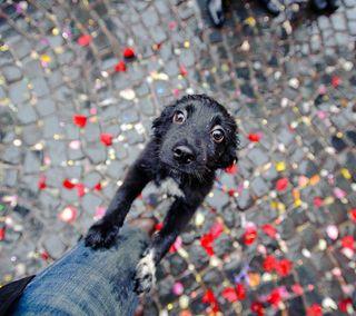 Обои на телефон пожелание, щенки, теплые, питомцы, милые, малыш, животные, глаза, pleading, a puppies wish