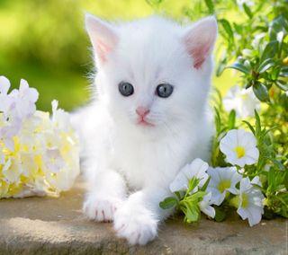 Обои на телефон sweet cat, кошки, милые, коты, питомцы