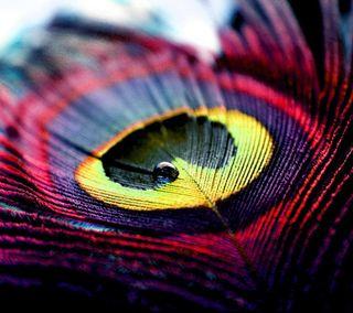 Обои на телефон павлин, цветные, роса, перо, новый, красочные, капли, peacock feather