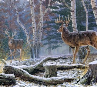 Обои на телефон картина, снег, лес, зима, дерево, deers