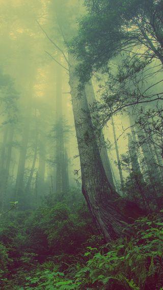 Обои на телефон поле, одинокий, лес, деревья, lonely forest