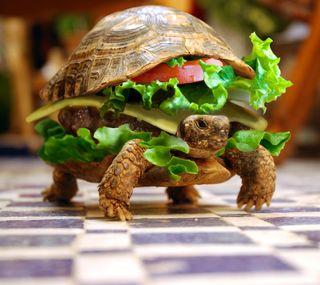 Обои на телефон черепаха, забавные, абстрактные, funny turtle