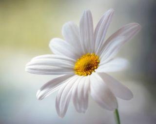 Обои на телефон лепестки, цветы, симпатичные, приятные, природа, покинуть, новый, естественные, дизайн, hd