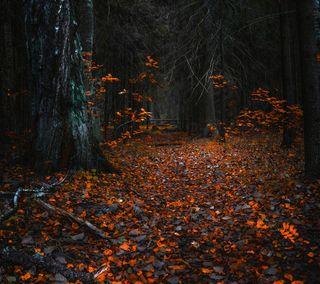 Обои на телефон оранжевые, листья, лес, дерево