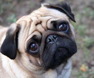 Обои на телефон питомцы, фан, грустные, so sad, doggie