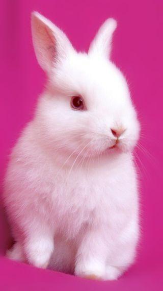 Обои на телефон милые, кролик