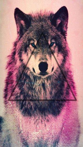 Обои на телефон хипстер, волк, hipster wolf, fgds