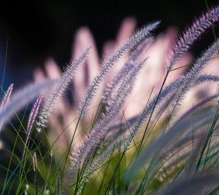 Обои на телефон трава, цветы, приятные, природа, вид, symphony