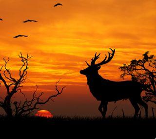 Обои на телефон олень, закат, дерево