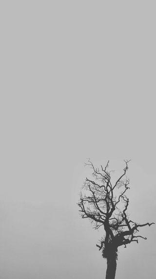Обои на телефон джунгли, черные, природа, одиночество, монохромные, дерево, белые, lonliness