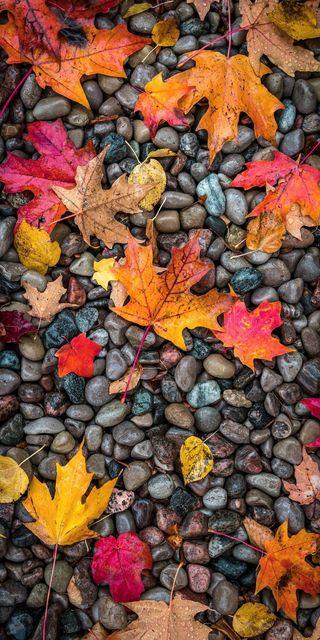 Обои на телефон фотографии, сцены, пейзаж, осень, любовь, листья, love, fall 4k, autumn pictures
